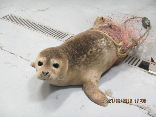 Long Island Seal
